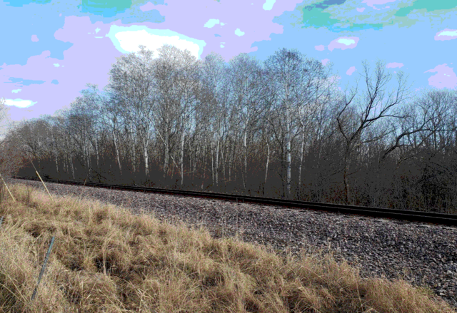 railside brch trees on a winter day
